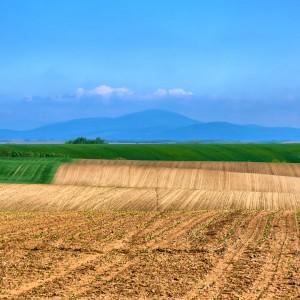 A Fertile Soil